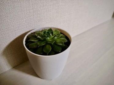 白い背景と観葉植物